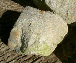 画像1: 江州産 守山石